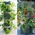 DIY Strawberry Tower with Built-in Reservoir