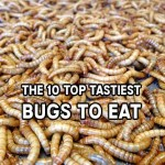The 10 Top Tastiest Bugs To Eat