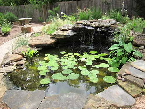 How To Clear A Murky Garden Pond