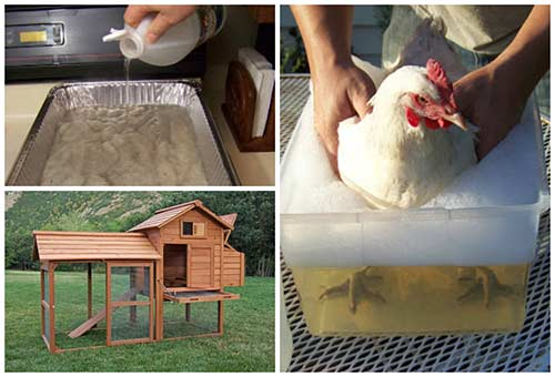 11 Amazing Uses For Vinegar Around The Chicken Coop