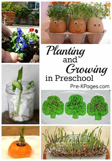 Science For Kids: Planting & Growing In Preschool