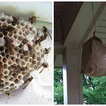 How To Get Rid Of Wasps With Just A Brown Paper Bag