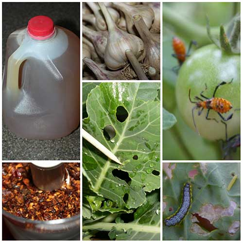 How To Make A Powerful All Natural Pest And Insect Spray