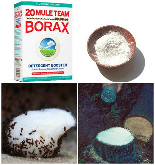 30 Little Known Uses For Borax