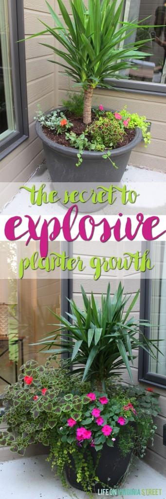 Image Credit: lifeonvirginiastreet.com