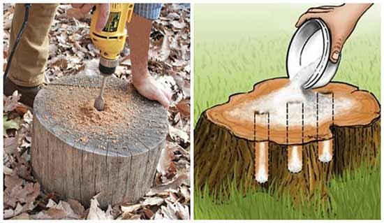 Epsom Salt Formula for Stump Removal