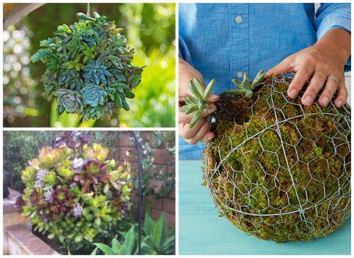 How To Make An Indoor / Outdoor Succulent hanging Sphere