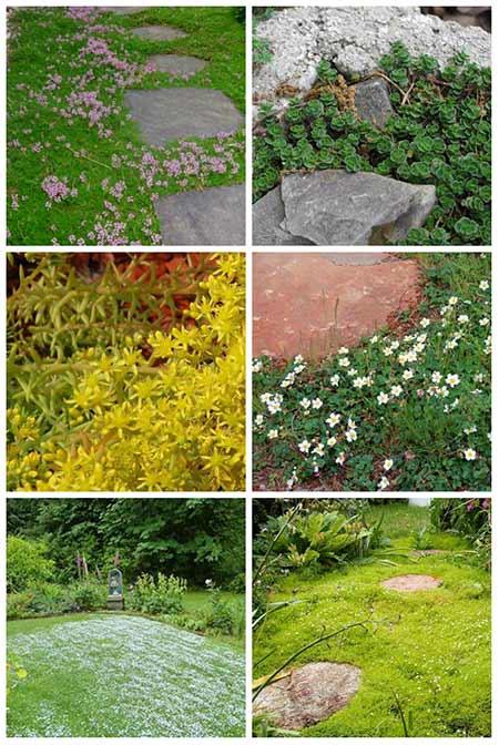 12 Amazing Stepable Plants