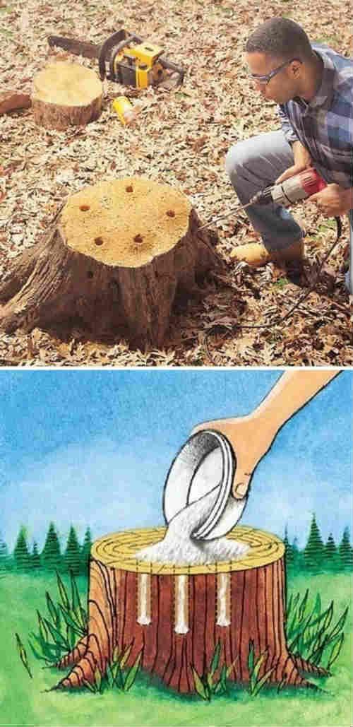 DIY Tree Stump Removal