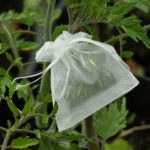 DIY Seed Bank Seeds