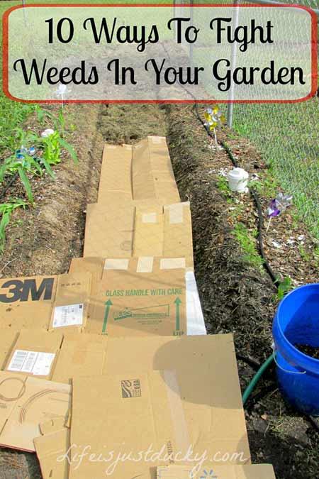 10 Top Ways to Fight Weeds in Your Garden