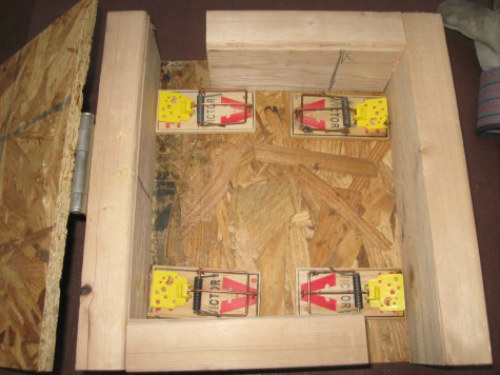 How To Build A Magical Mouse Box Trap