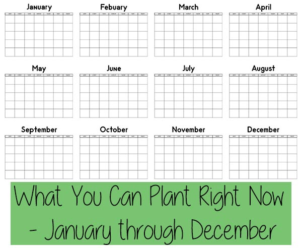 What You Can Plant Right Now – January through December