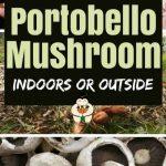 How to Grow Portobello Mushrooms at Home